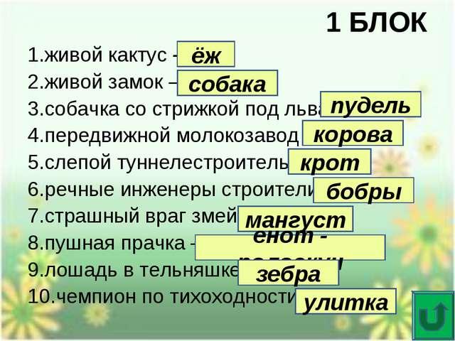 1 БЛОК 1.живой кактус – 2.живой замок – 3.собачка со стрижкой под льва – 4.пе...