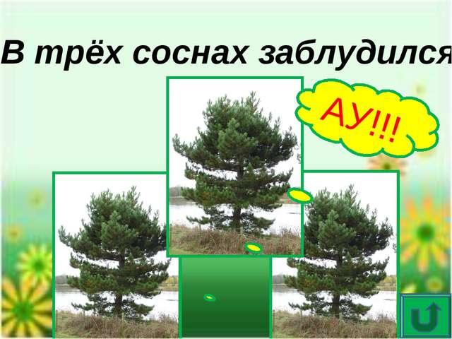 Опознай пословицу Потерялся в небольшом количестве хвойных вечнозелёных дерев...