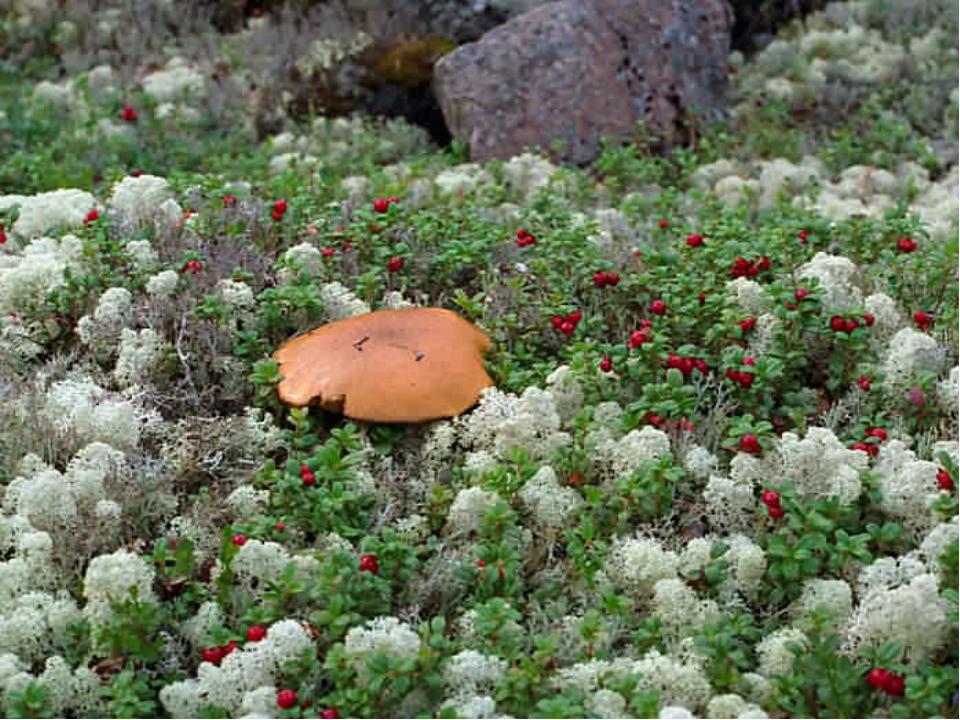 Растительный мир 1.Где на земном шаре грибы бывают выше окружающих деревьев?...