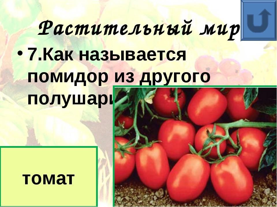 Растительный мир 7.Как называется помидор из другого полушария? томат