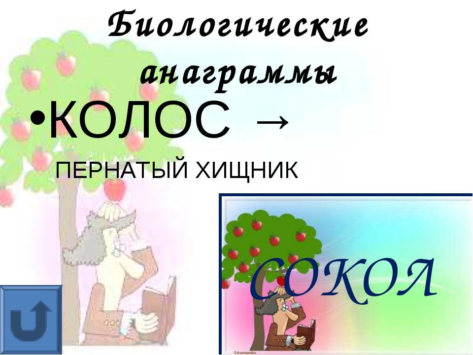 Биологические анаграммы КОЛОС → ПЕРНАТЫЙ ХИЩНИК СОКОЛ