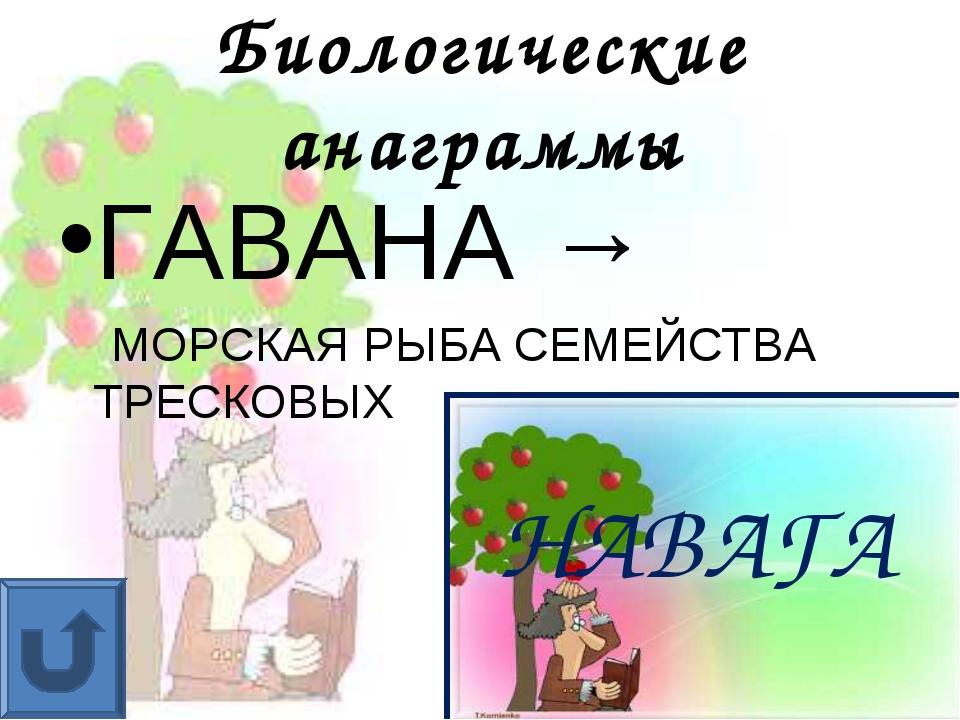 Биологические анаграммы ГАВАНА → МОРСКАЯ РЫБА СЕМЕЙСТВА ТРЕСКОВЫХ НАВАГА
