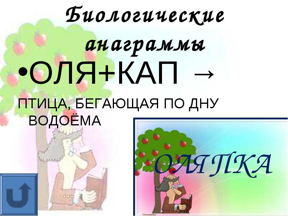 Биологические анаграммы ОЛЯ+КАП → ПТИЦА, БЕГАЮЩАЯ ПО ДНУ ВОДОЁМА ОЛЯПКА