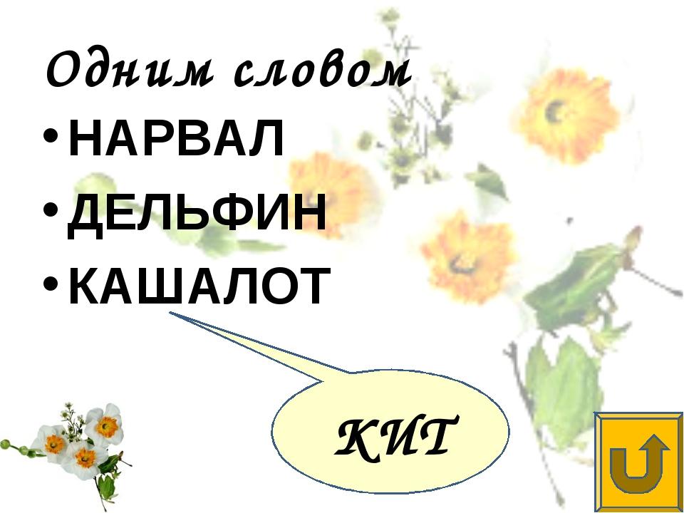 Одним словом НАРВАЛ ДЕЛЬФИН КАШАЛОТ КИТ
