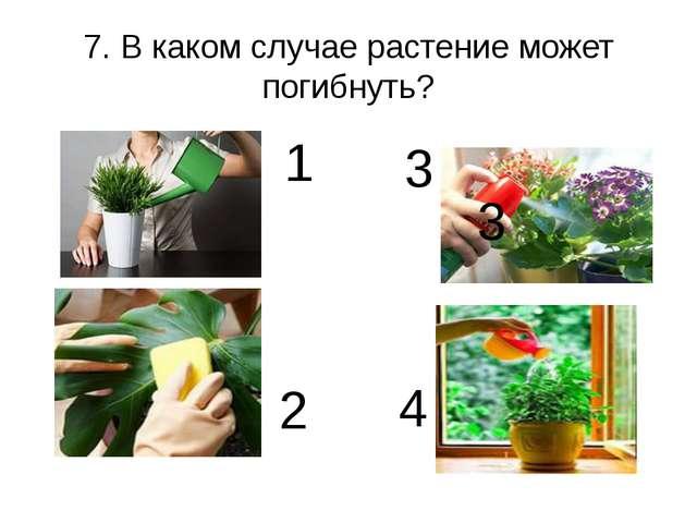 7. В каком случае растение может погибнуть? 2 1 3 3 4