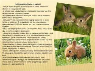 Интересные факты о зайцах - зайцев можно встретить в любой стране на земле, т