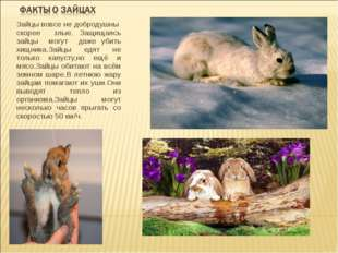 Зайцы вовсе не добродушны скорее злые. Защищаясь зайцы могут даже убить хищни