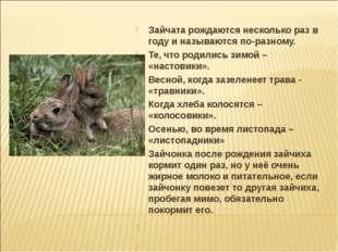 Зайчата рождаются несколько раз в году и называются по-разному. Те, что родил