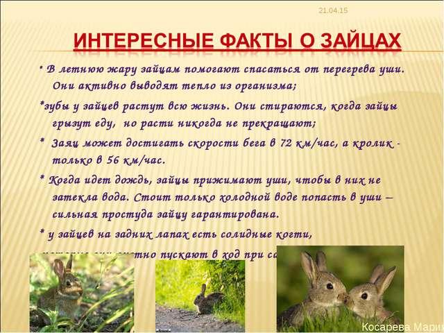 * * В летнюю жару зайцам помогают спасаться от перегрева уши. Они активно выв...
