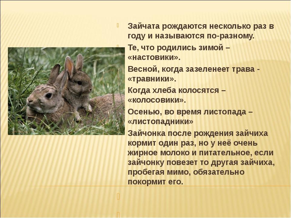 Зайчата рождаются несколько раз в году и называются по-разному. Те, что родил...
