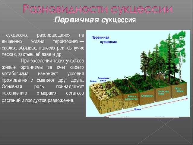 Первичная сукцессия —сукцессия, развивающаяся на лишенных жизни территориях—...