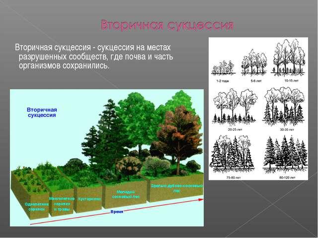 Вторичная сукцессия - сукцессия на местах разрушенных сообществ, где почва и...