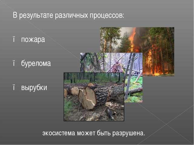 В результате различных процессов: ● пожара ● бурелома ● вырубки экосистема мо...