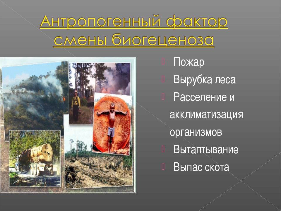 Пожар Вырубка леса Расселение и акклиматизация организмов Вытаптывание Выпас...