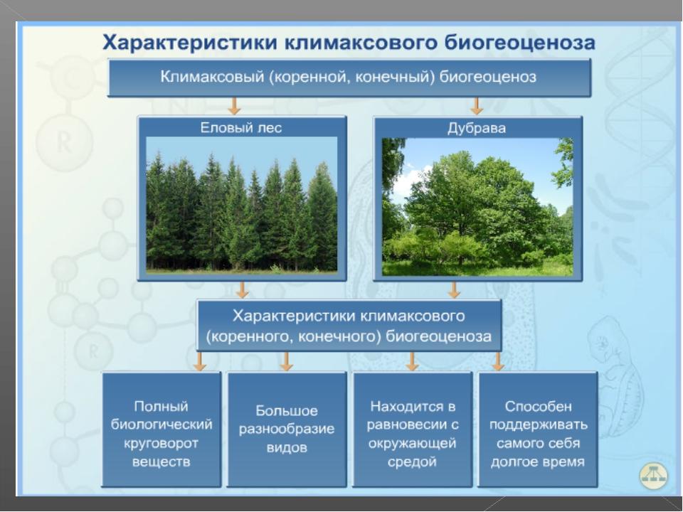 Видовое разнообразие как специфическая характеристика биоценоза