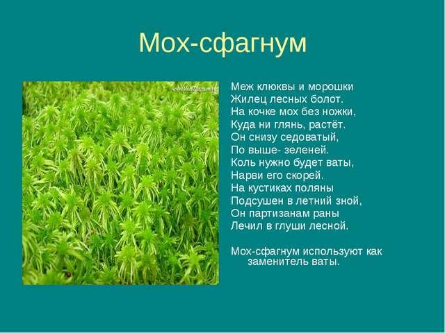 Мох-сфагнум Меж клюквы и морошки Жилец лесных болот. На кочке мох без ножки,...