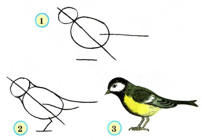 Конспект урока по рисованию в 1 классе рисуем птицу