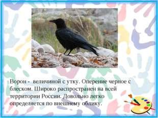 Ворон - величиной с утку. Оперение черное с блеском. Широко распространен на