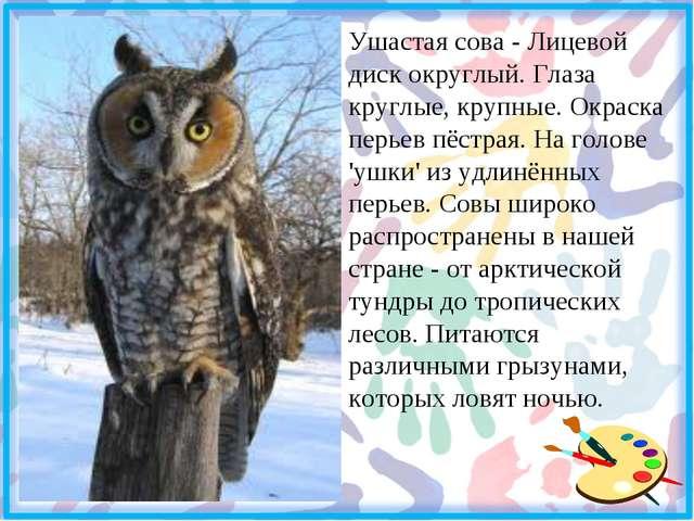 Ушастая сова - Лицевой диск округлый. Глаза круглые, крупные. Окраска перьев...