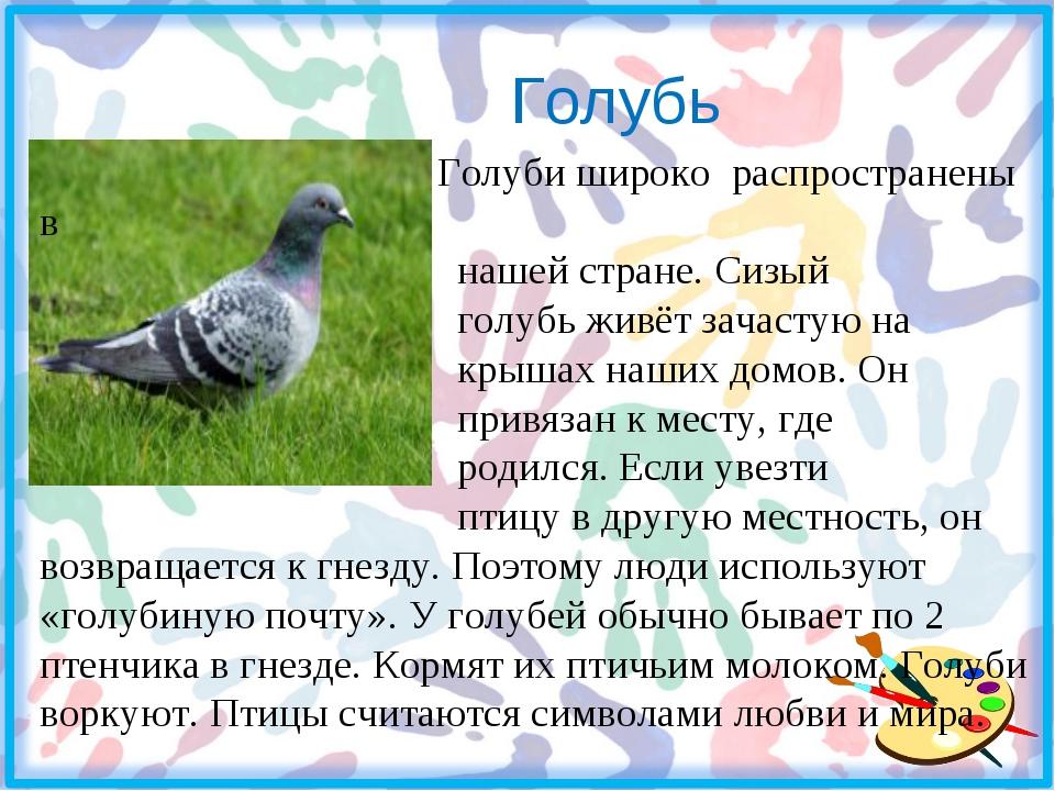 Голубь Голуби широко распространены в нашей стране. Сизый голубь живёт зачас...