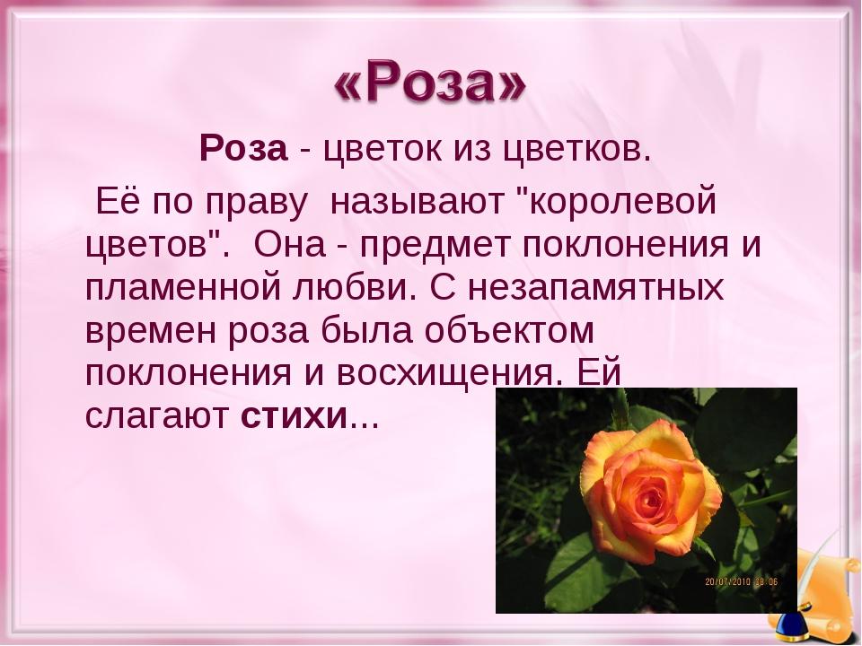 """Роза- цветок из цветков. Её по праву называют """"королевой цветов"""". Она- пре..."""