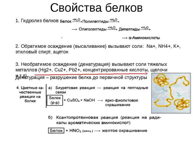 Свойства белков Денатурация – разрушение белка до первичной структуры 1. Гидр...