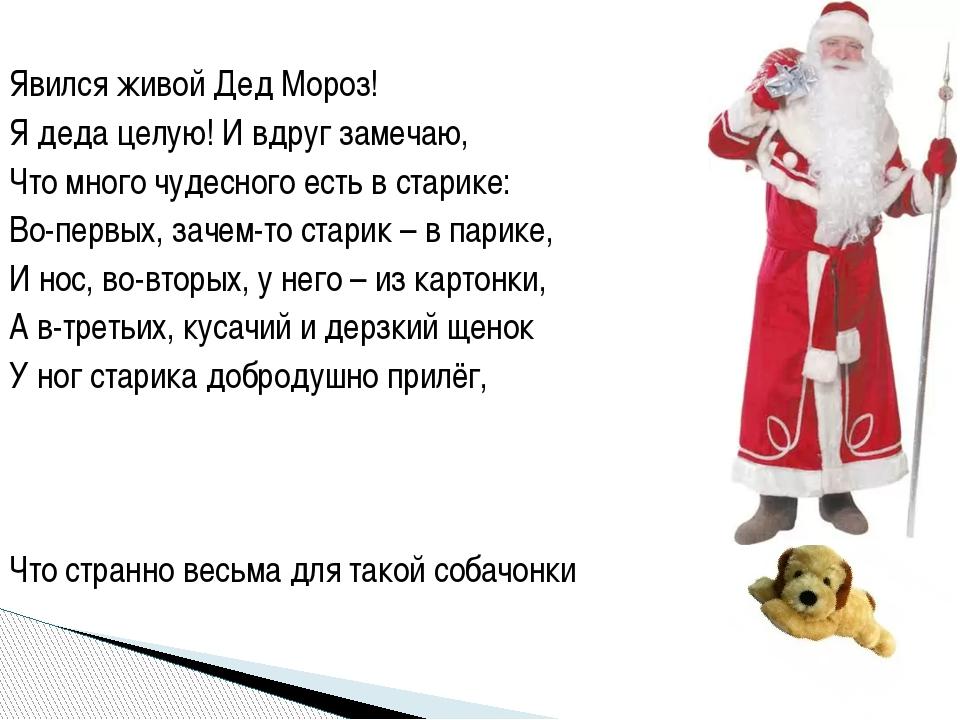 Явился живой Дед Мороз! Я деда целую! И вдруг замечаю, Что много чудесного ес...