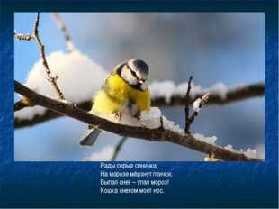 Рады серые синички: На морозе мёрзнут птички, Выпал снег – упал мороз! Кошка