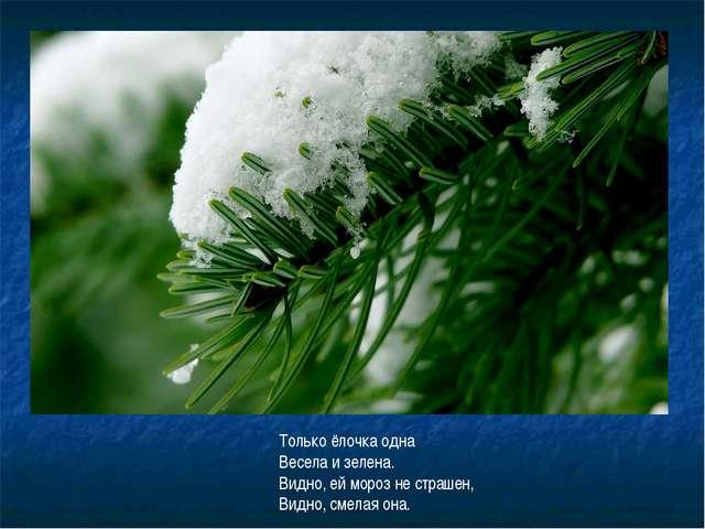 Только ёлочка одна Весела и зелена. Видно, ей мороз не страшен, Видно, смелая...