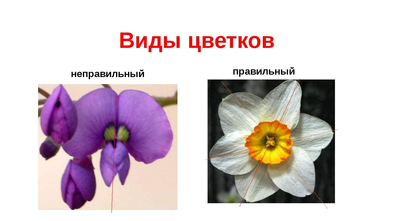 неправильный правильный Виды цветков
