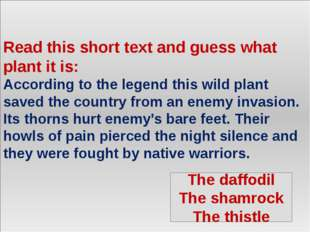 Read this short text and guess what plant it is: According to the legend thi