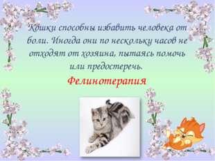 Кошки способны избавить человека от боли. Иногда они по нескольку часов не от