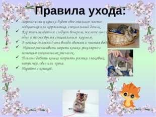 Правила ухода: Хорошо если у кошки будетсвое спальное место: подушечка или к