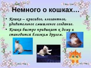 Немного о кошках… Кошка – красивое, элегантное, удивительное смышленое создан
