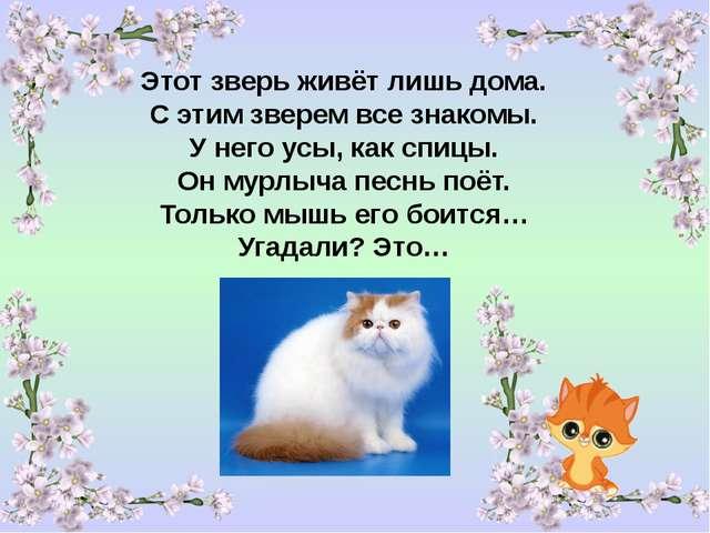 Стих по кота рыжего