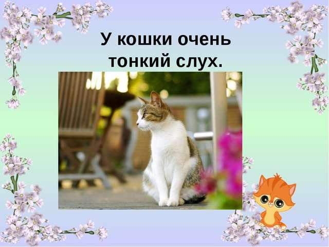 У кошки очень тонкий слух.