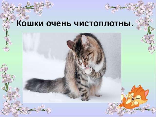 Кошки очень чистоплотны.