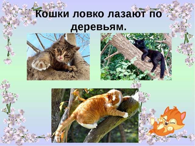 Кошки ловко лазают по деревьям.