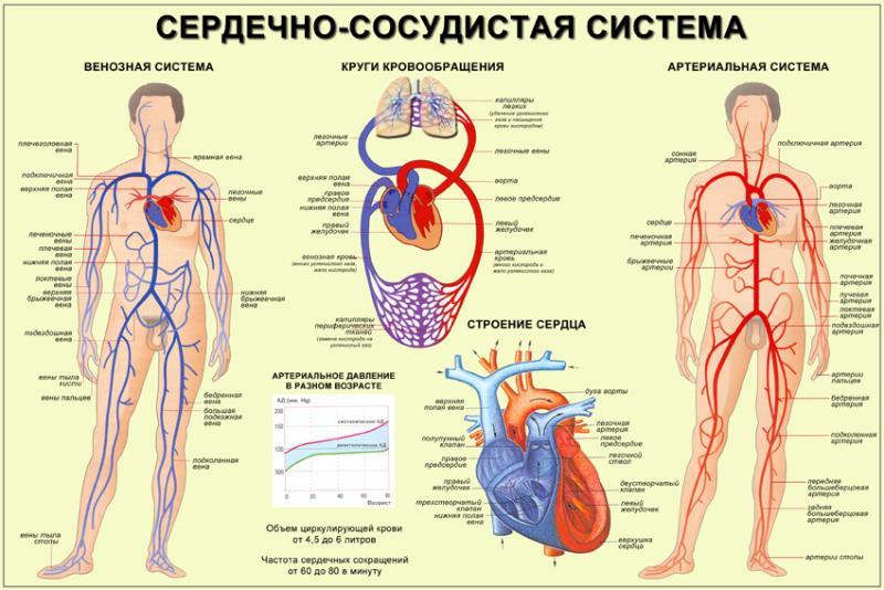 29_07_2013 г. Заболевания сердечно-сосудистой системы и КФС
