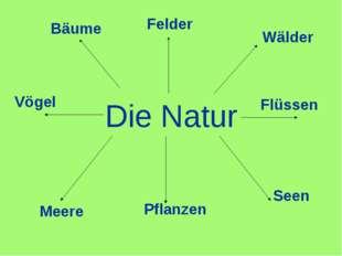 Die Natur Wälder Flüssen Seen Pflanzen Meere Vögel Bäume Felder