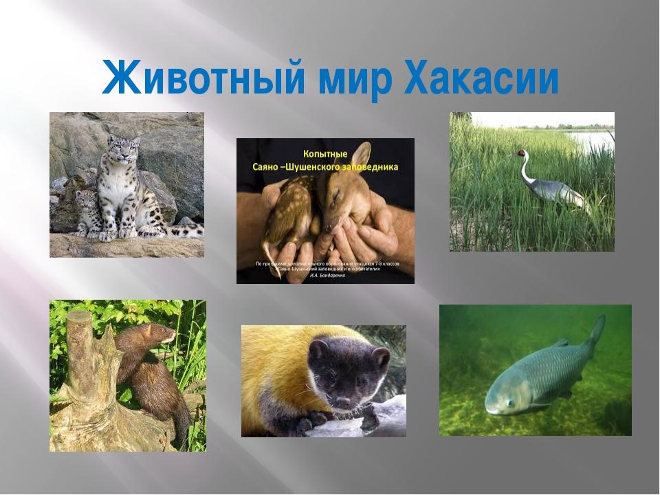 Животный мир Хакасии