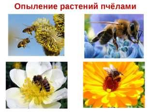 Опыление растений пчёлами