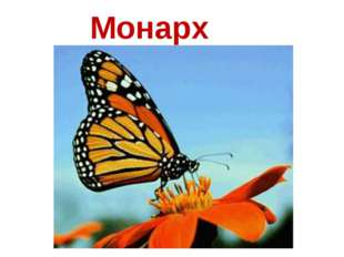 Монарх