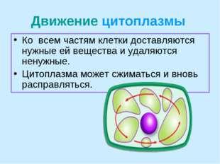 Движение цитоплазмы Ко всем частям клетки доставляются нужные ей вещества и у