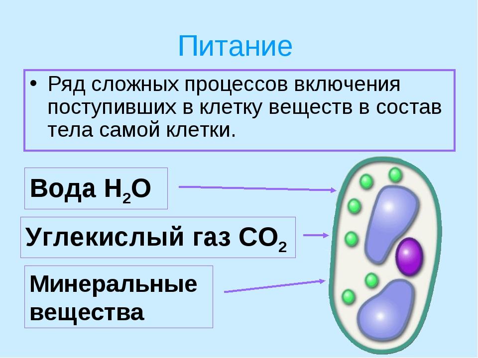 Питание Ряд сложных процессов включения поступивших в клетку веществ в состав...