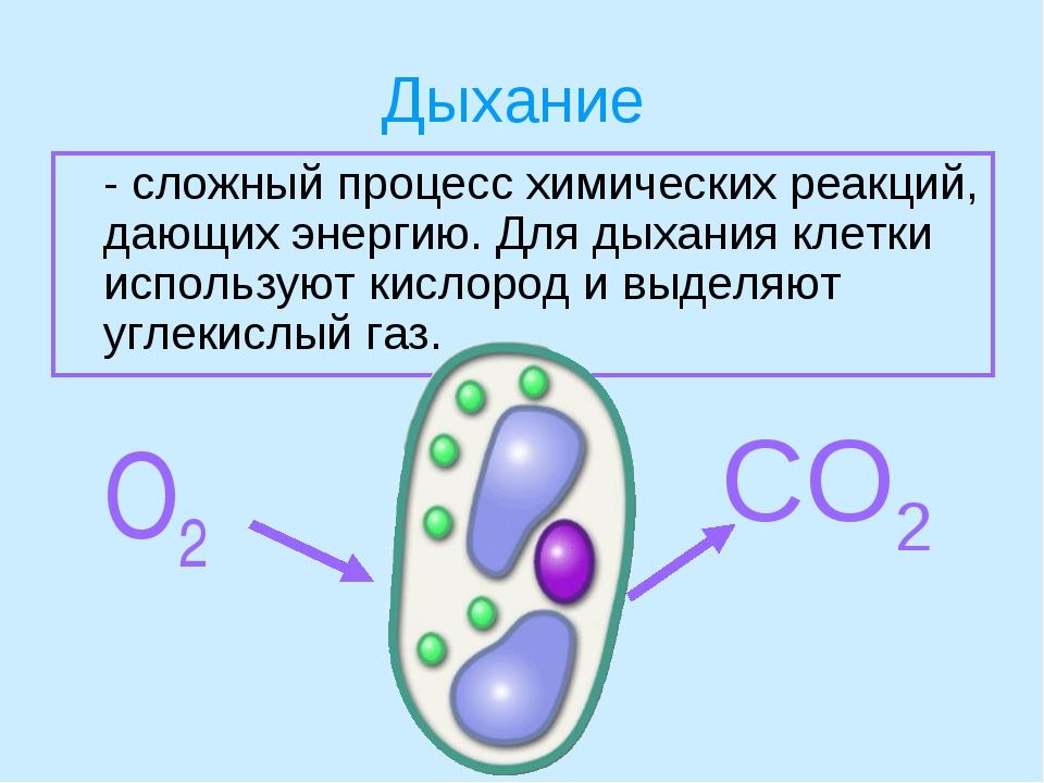 Дыхание - сложный процесс химических реакций, дающих энергию. Для дыхания кл...