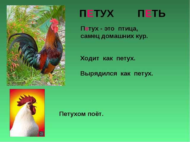 ПЕТУХ ПЕТЬ Петух - это птица, самец домашних кур. Ходит как петух. Вырядился...