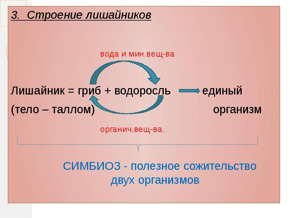 3. Строение лишайников вода и мин.вещ-ва Лишайник = гриб + водоросль единый...