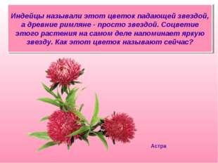 Индейцы называли этот цветок падающей звездой, а древние римляне - просто зве