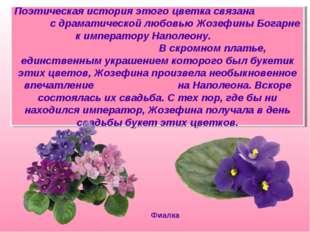 Поэтическая история этого цветка связана с драматической любовью Жозефины Бог